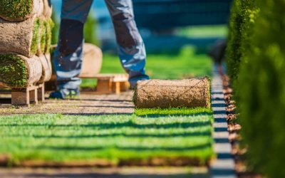 Laying your lawn