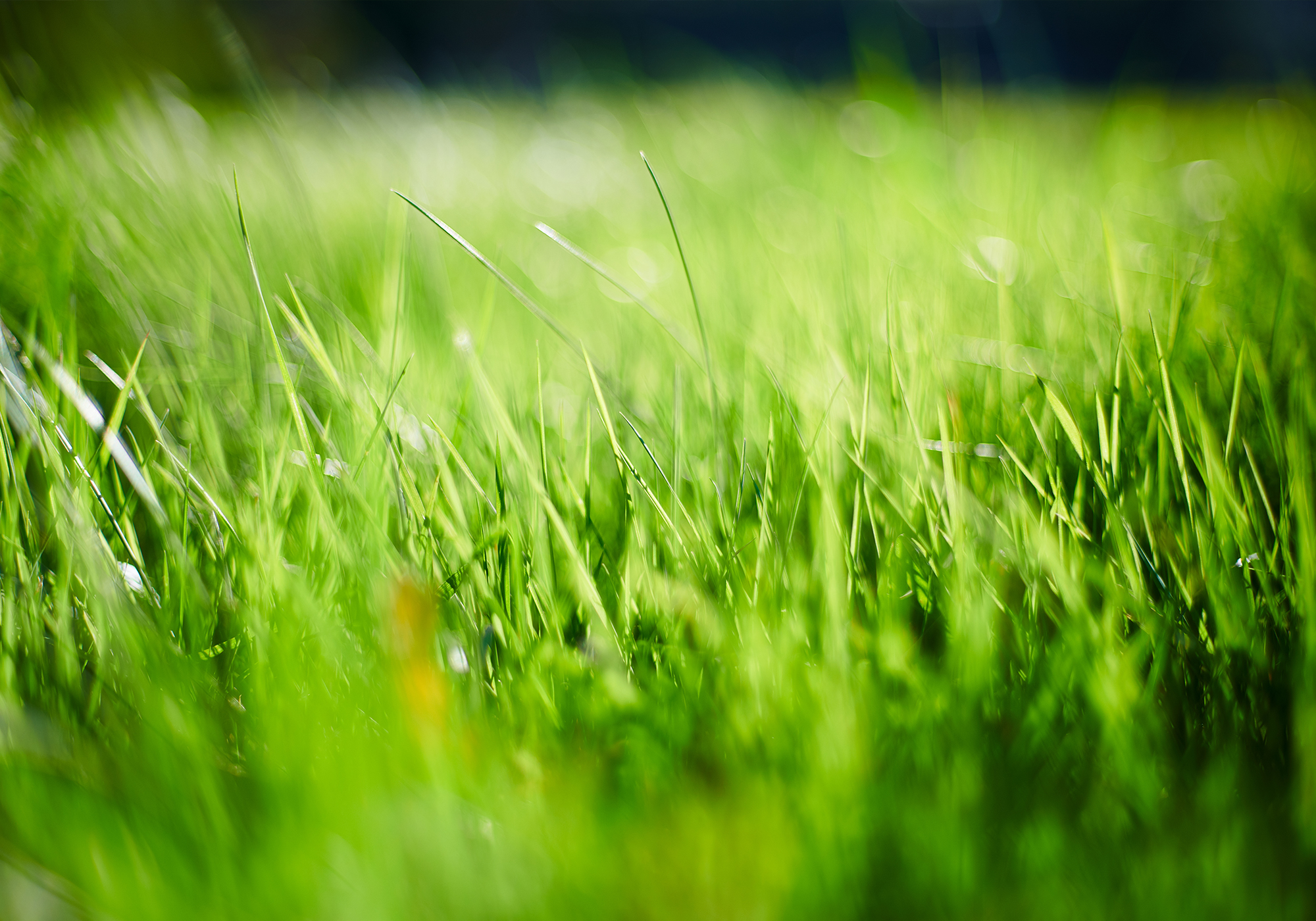 Instant Turf Melbourne - Instant Turf Oakleigh - Buy Turf Online Oakleigh
